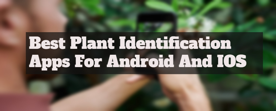 10 Best Plant Identification Apps For Android And IOS